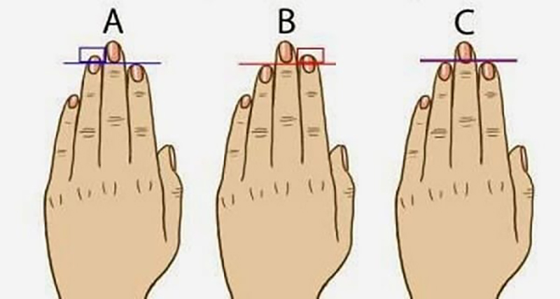 The diagram shows how index and ring finger lengths can be different on certain people.