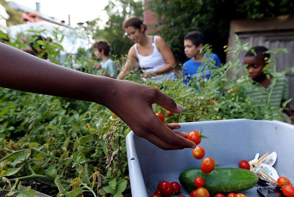 Gardening In Bulk For Sustenance