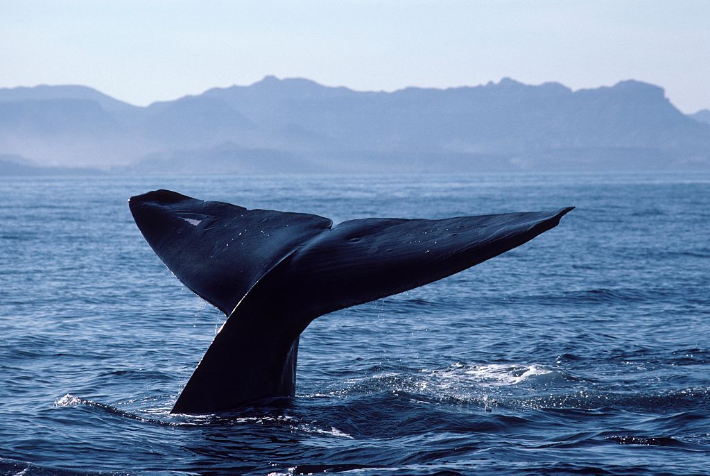 whale tail sticking out of the water