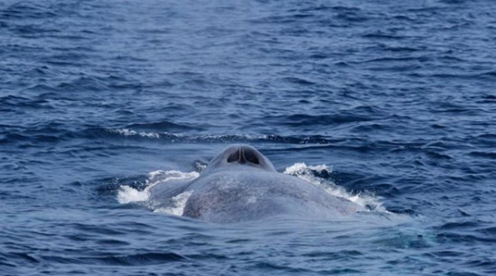 the backside of an omura whale
