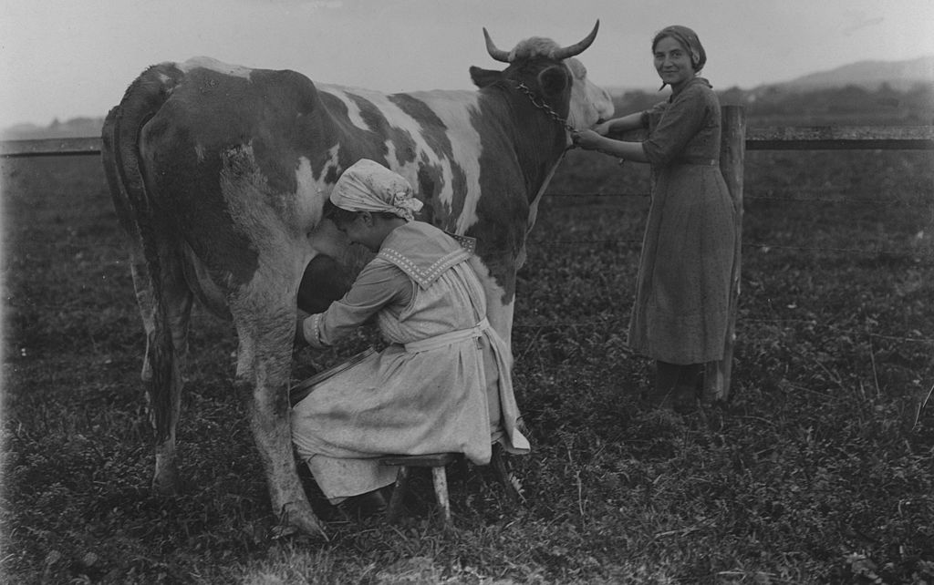 one woman sits milking the cow with a second woman standing, holding the animal by a chain around its neck