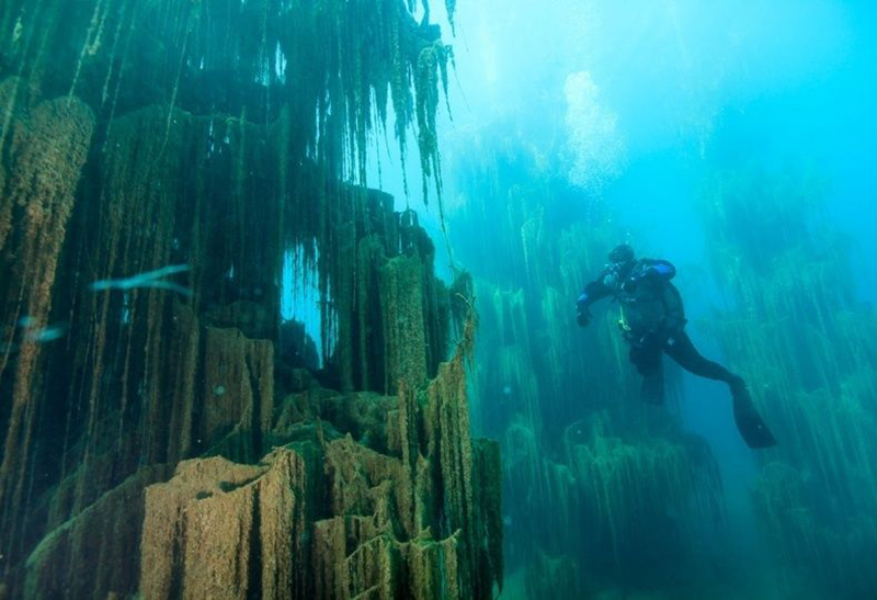 A diver explores an underwater forest.