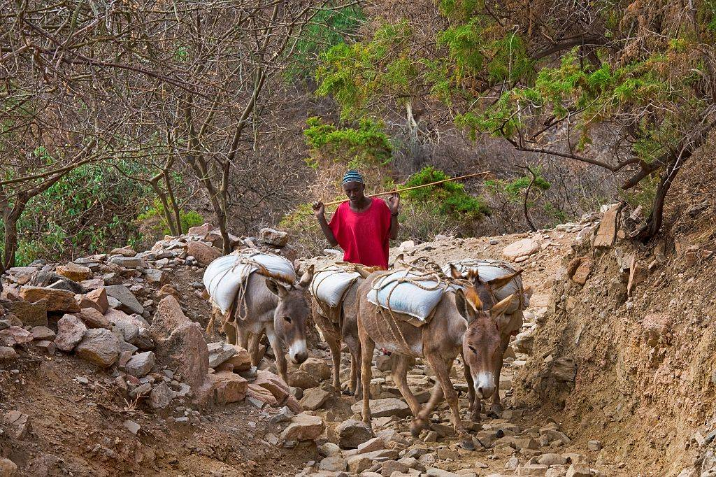 Man with donkeys
