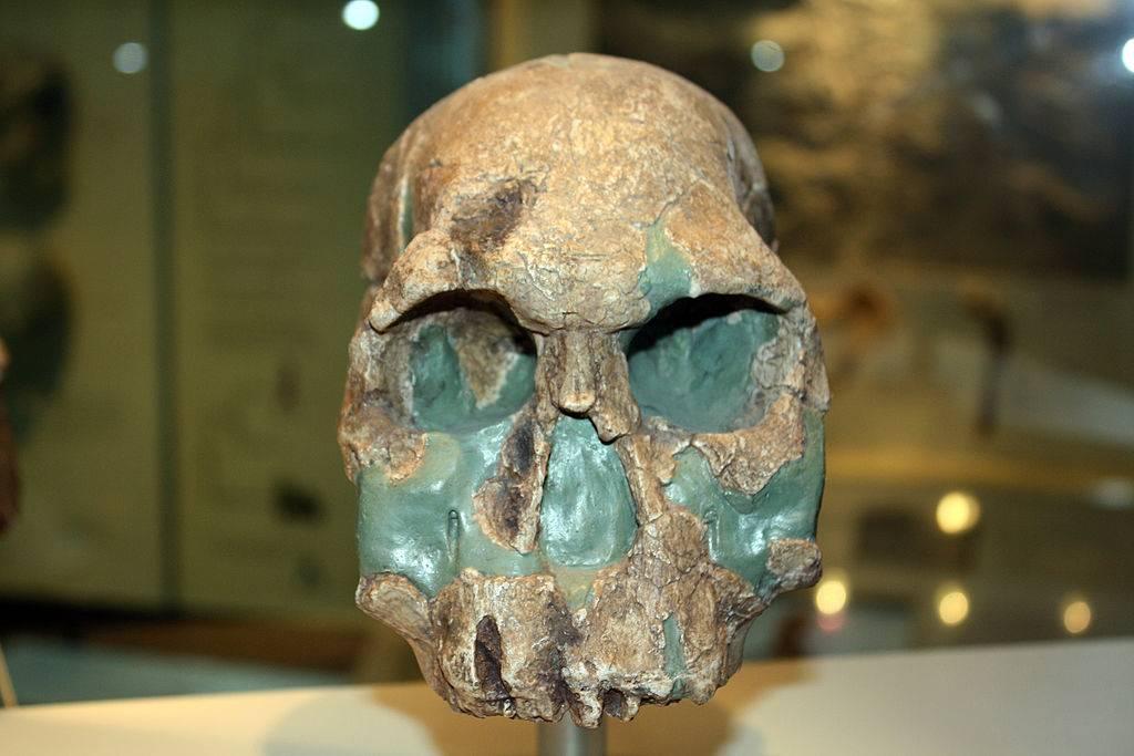 Old skull