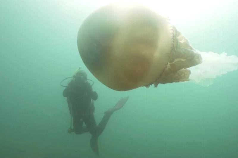 giant-jellyfish-1-80373