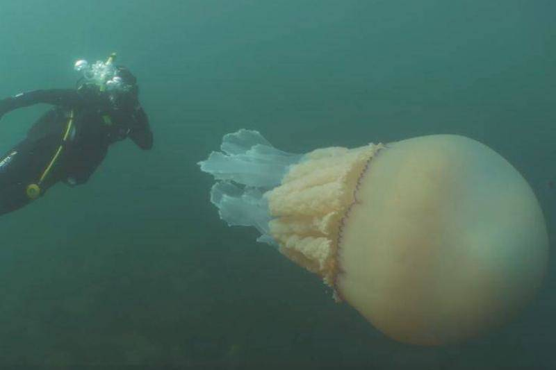giant-jellyfish-5-34203