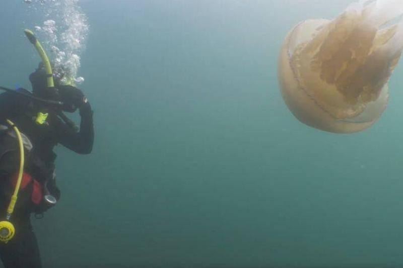 giant-jellyfish-6-77997