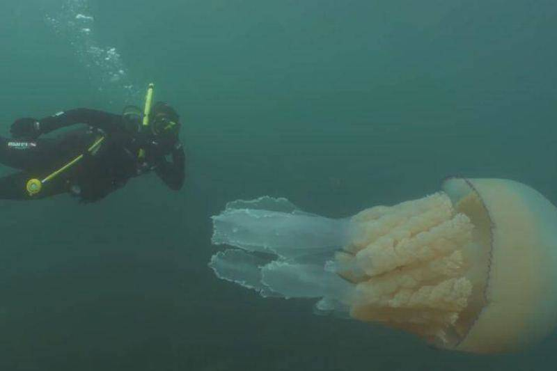 giant-jellyfish-7-95359