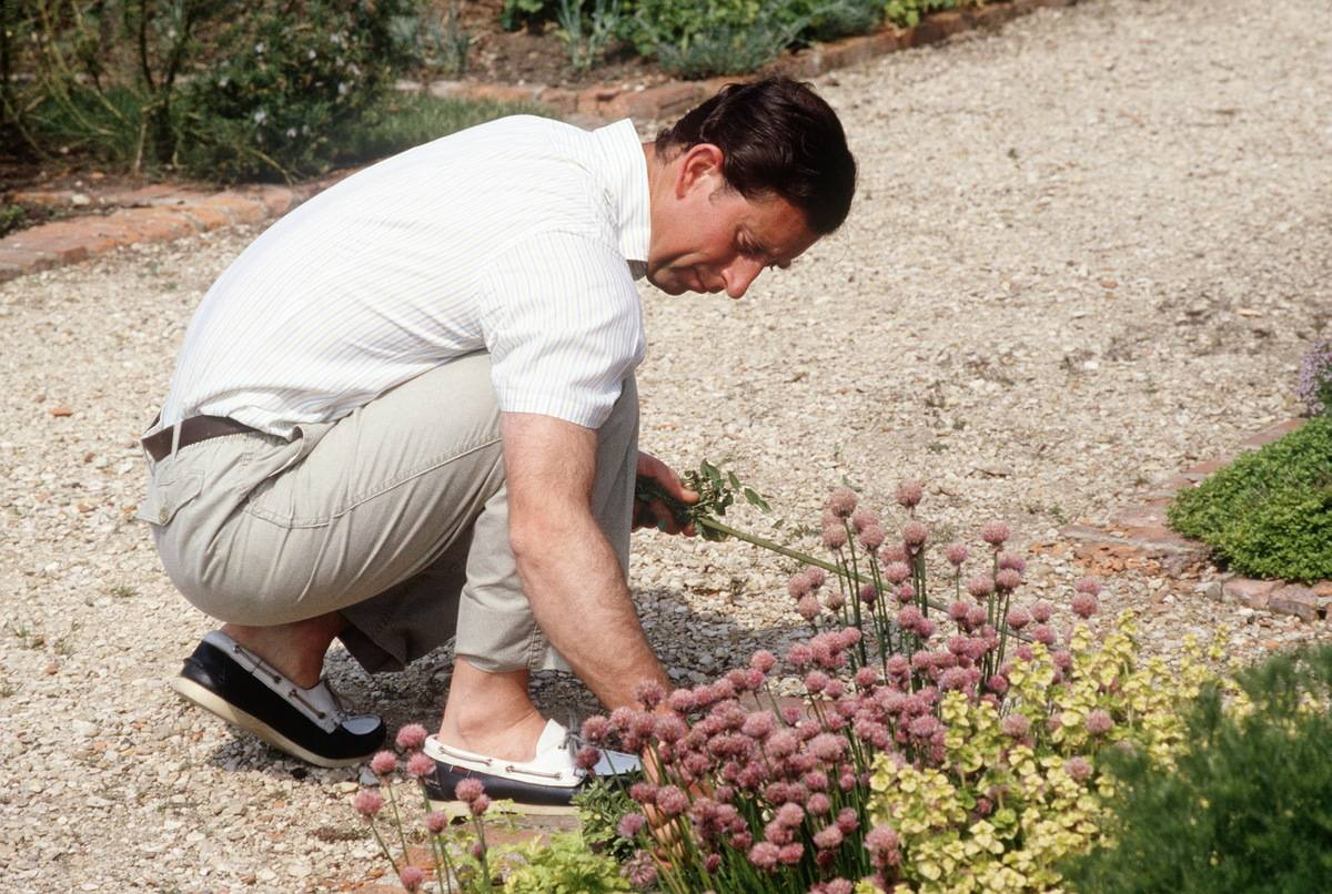 Eliminate Those Pesky Weeds From Your Walkway