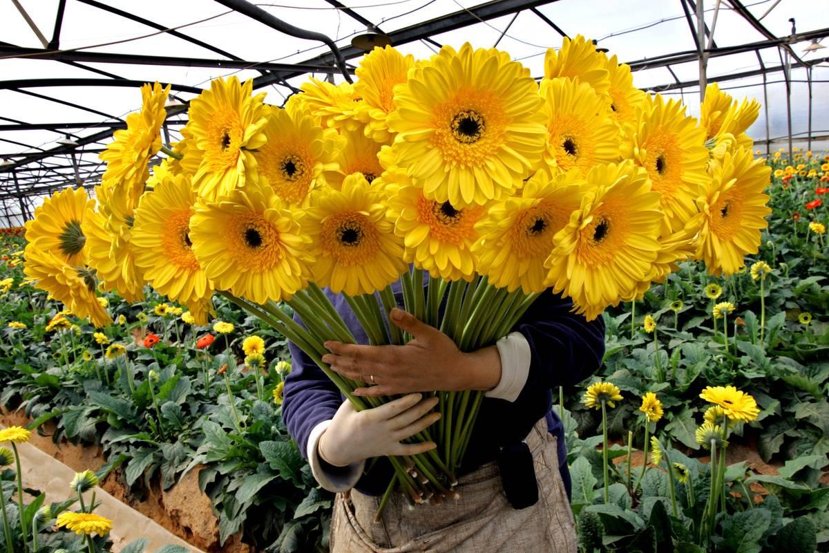 Keep Fresh Cut Flowers Alive Longer