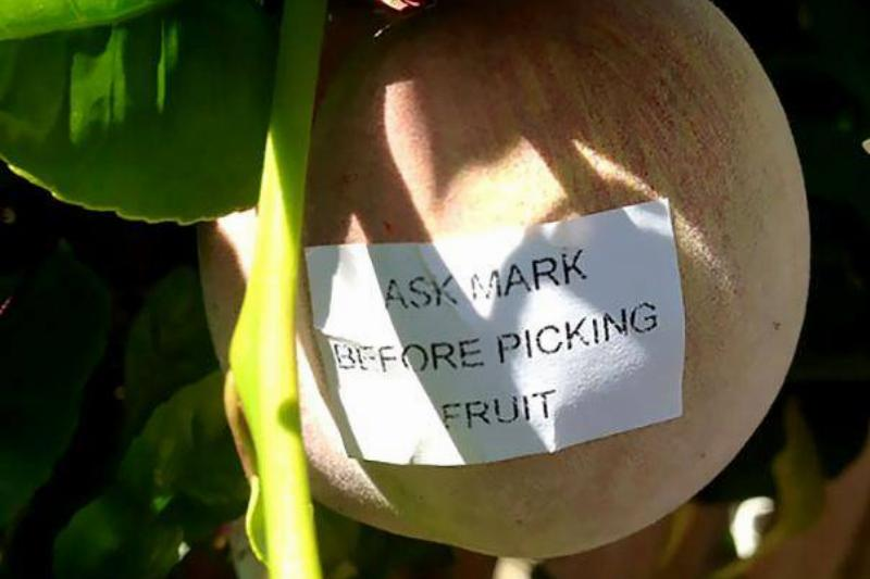 picking-fruit-neighbor-note-67321