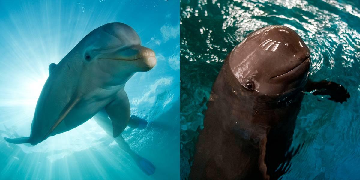 Dolphin Vs. Porpoise