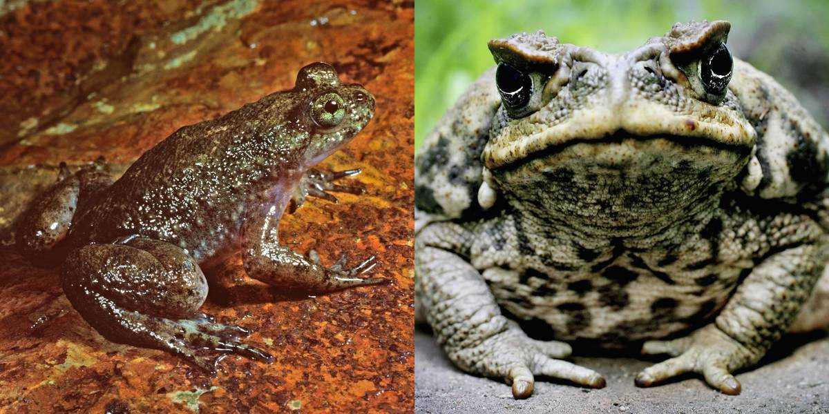 Frogs Vs. Toads