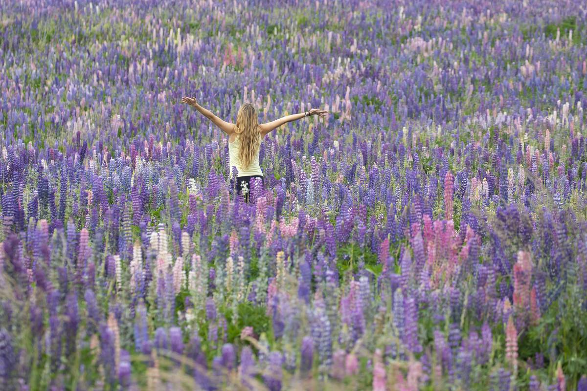 A woman enjoys herself in a field of lavender flowers.