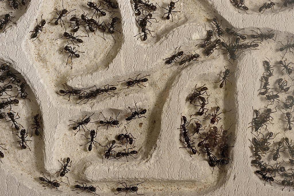 ants marching through a dirt maze