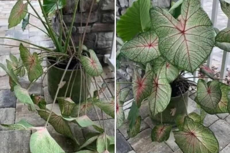 drama-plant-14-49296