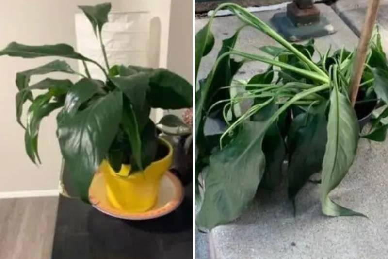 drama-plant-3-1-35942