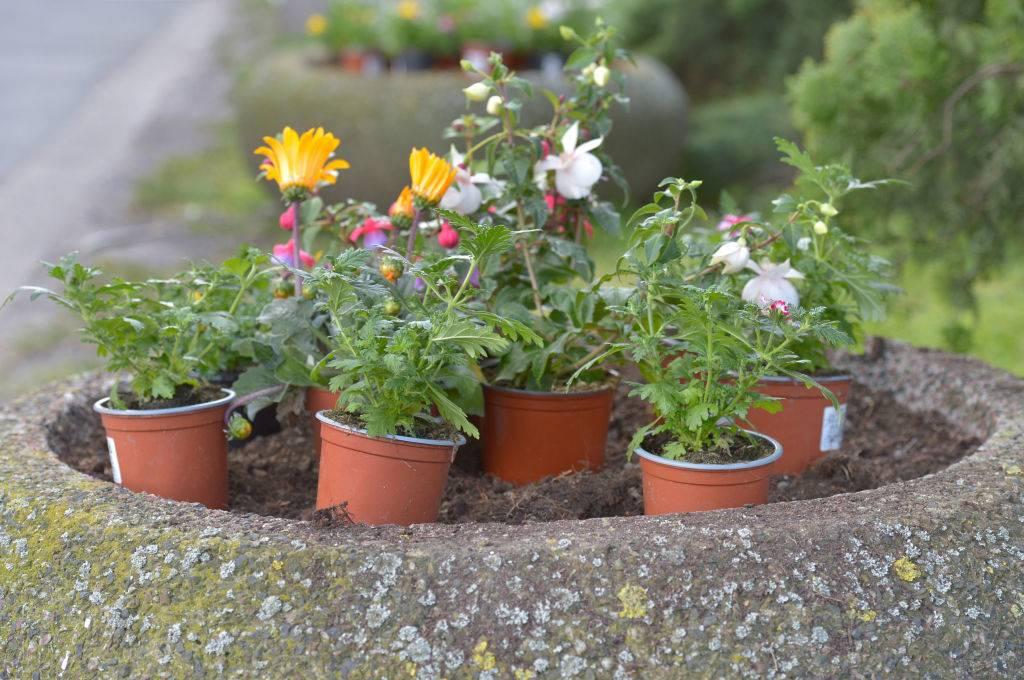 flowers in small pots outside