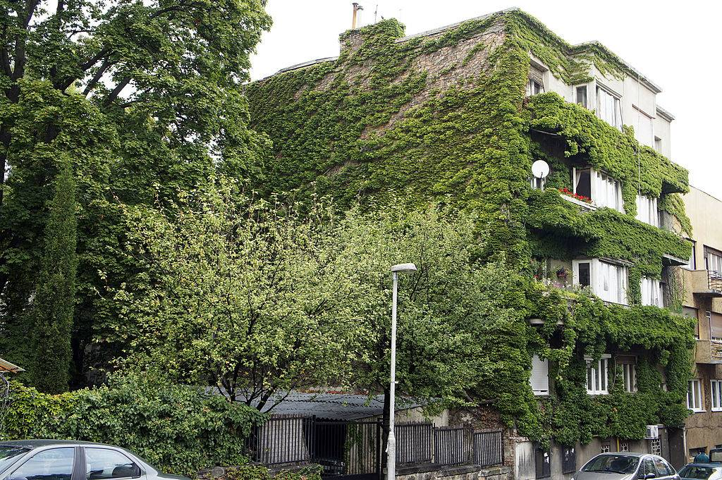 a house covered in vines