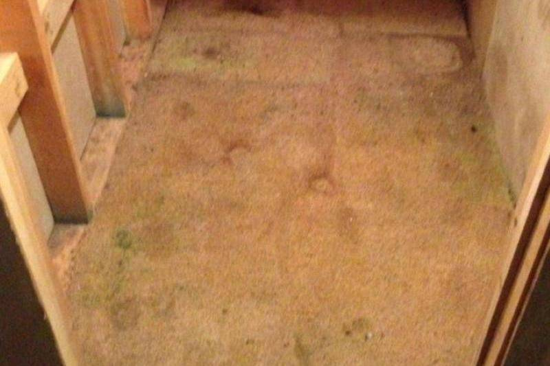 The Carpet Was Covering Something