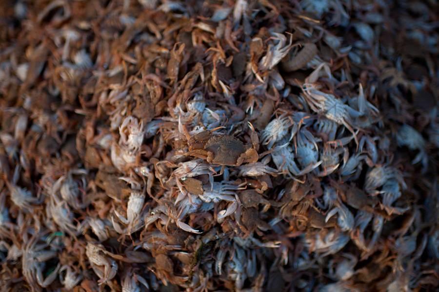 a-big-haul-of-crabs-49129