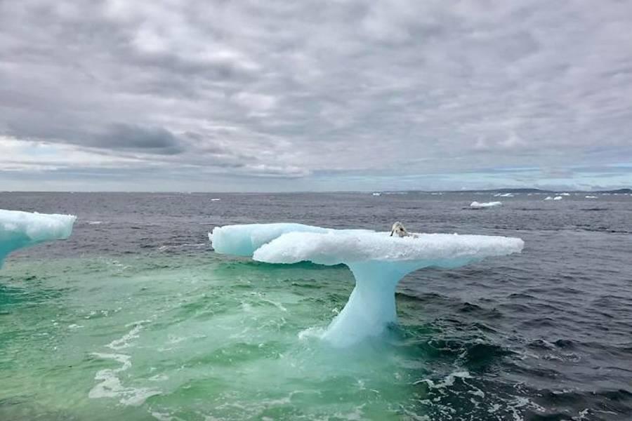 mystery-creatire-found-on-top-of-iceberg-49193