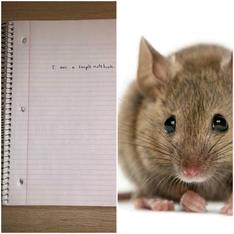 rat margin