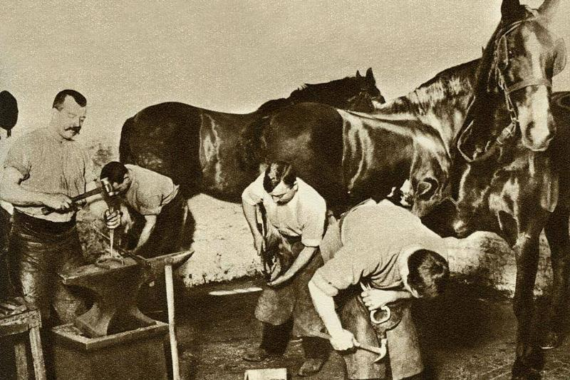 Horseback Riding And Maintenance For Transportation