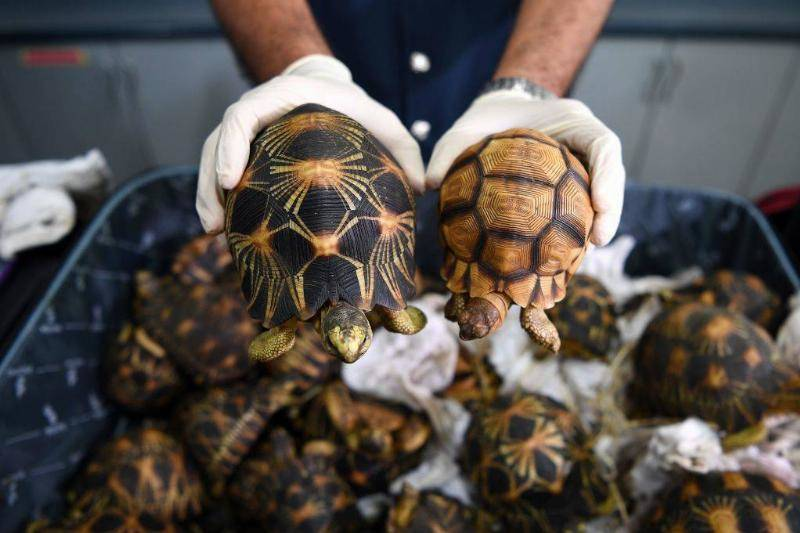 Many Of The Tortoises Would Make A Full Recovery