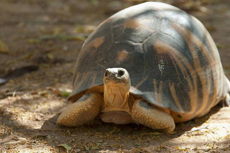 The Tortoises Can Weigh Up To 35 Pounds