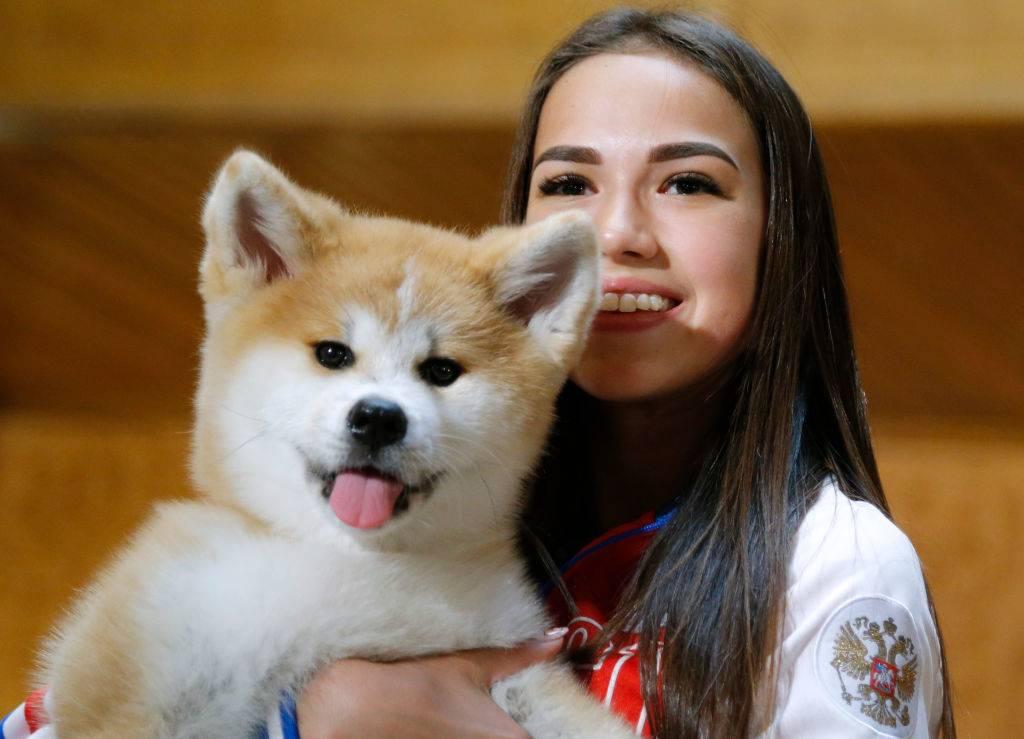 akita dog sticking its tongue out