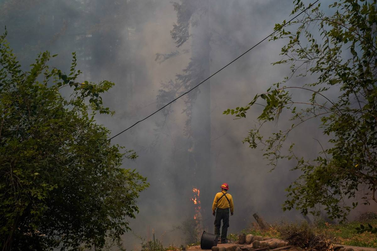 Firefighters put out the flames on a tree in Oregon.