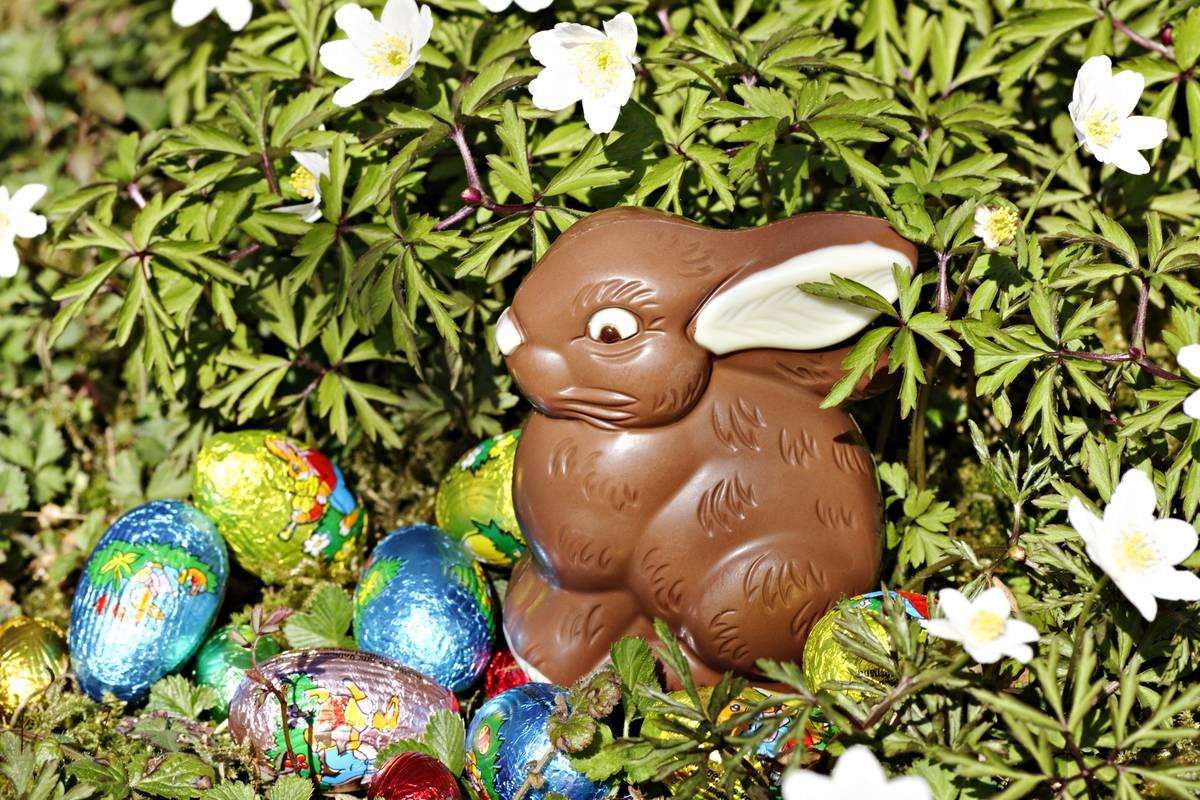 Chocolate-rabbit