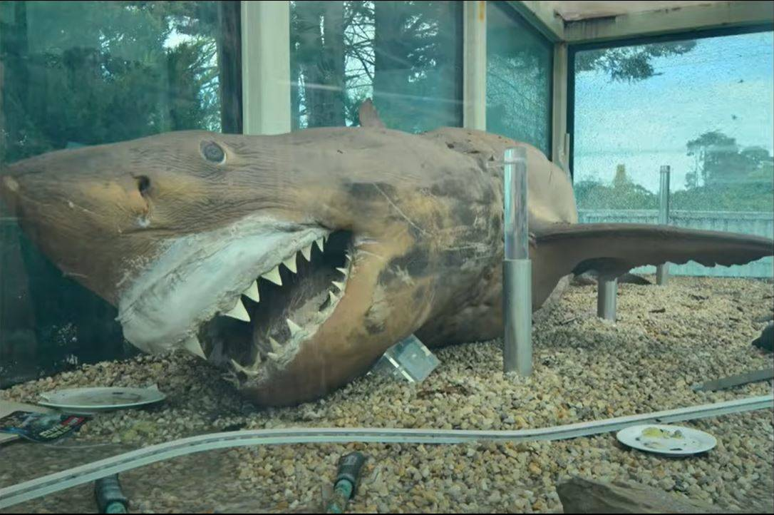 rosie the shark on top of some gravel