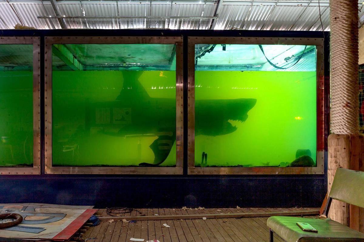 rosie the shark inside a shark tank with green fluid