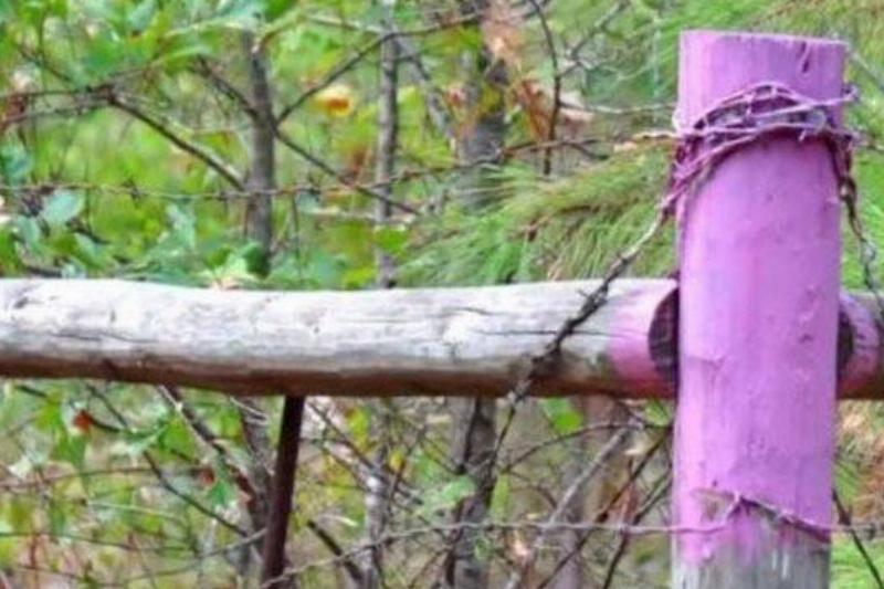 Purple-on-a-fence-post_08172020_59449-768w