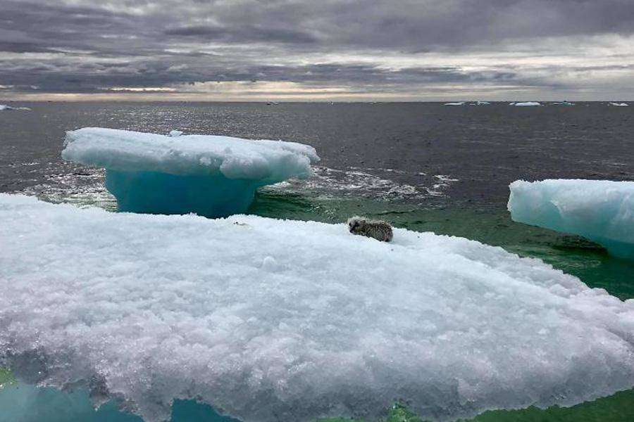 iceberg-animal-resceu-73745