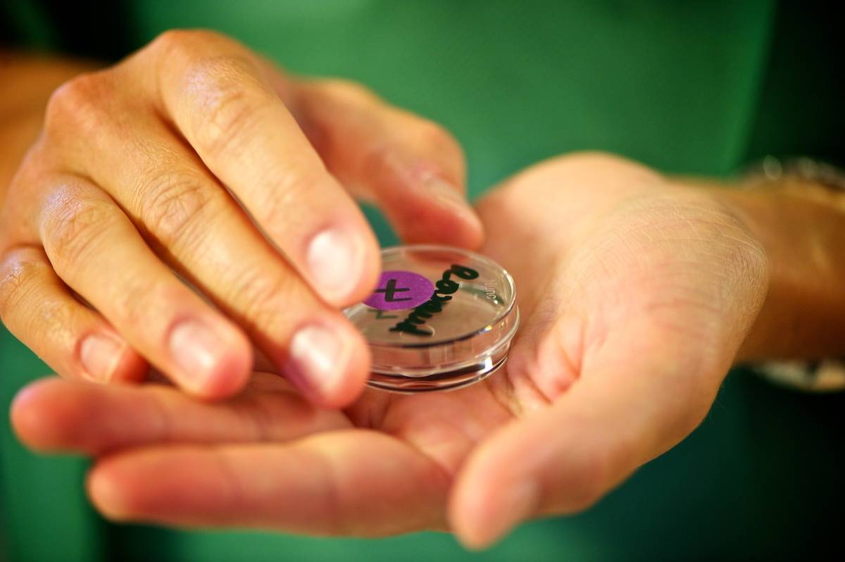 A doctor holds an IVF petri dish.