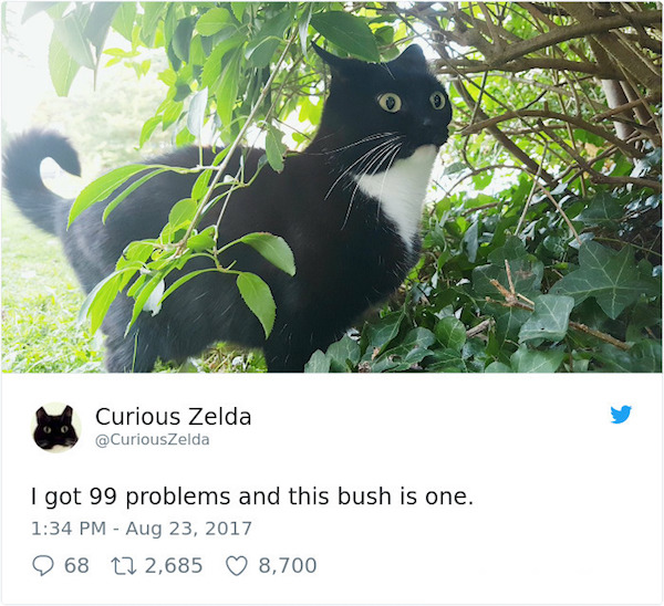 Curious Zelda in a bush.jpg