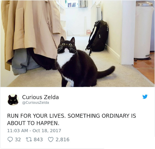 Curious Zelda is an awesome cat.jpg