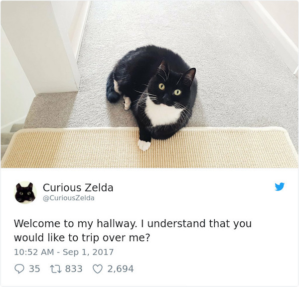 Curious Zelda will not bow to your requests.jpg