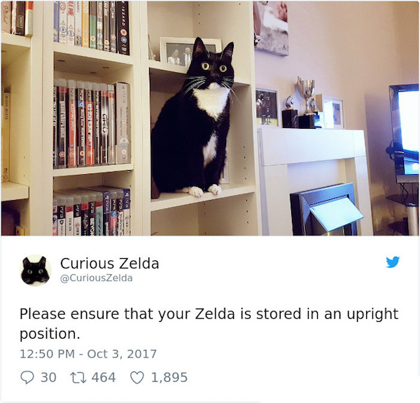 How To Store A Curious Zelda.jpg