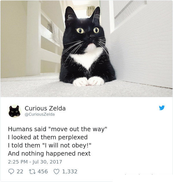 Twitter has a new favorite cat - Curious Zelda.jpg