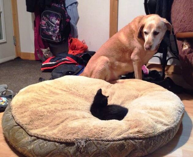 cat-steals-bed.jpg