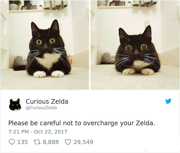 curious-zelda-cat-tweets-1-5a0edb31c7072__700.jpg