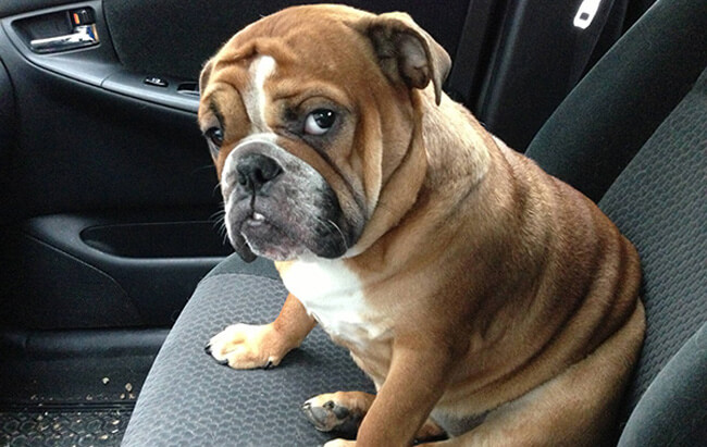 Priceless Photos Of Pets Realizing That They're Going To The Vet 44