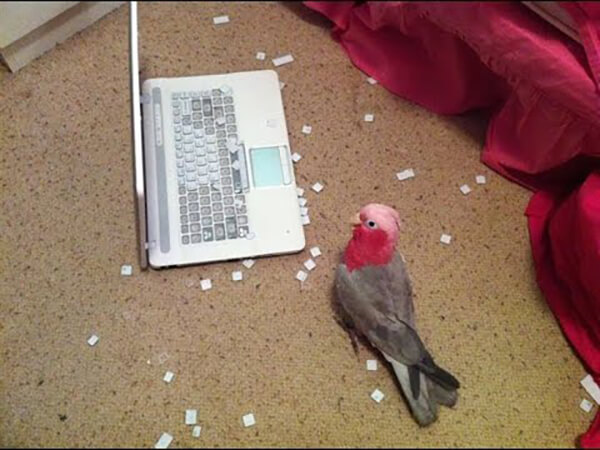 laptop-bird-jerk.jpg