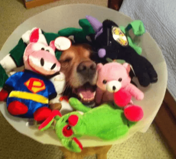 All the toys cone of shame.jpg