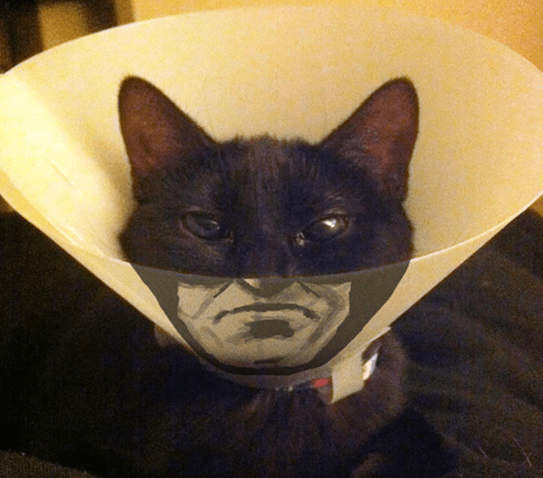Batman Cat cone of shame.jpg