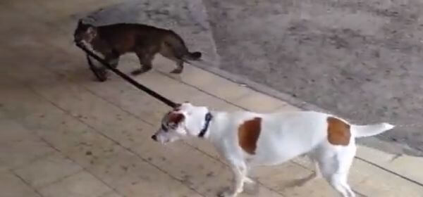 Cat-Taking-a-Dog-For-a-Walk.jpg